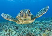 tortue verte hawaii - les 10 plus belles plages du monde