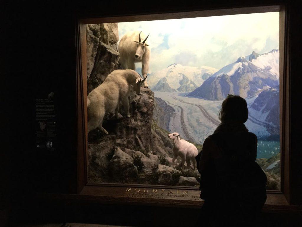 Le Musée américain d'histoire naturelle est connu pour ses scènes d'animaux sauvages.  - Occuper ses enfants pendant le confinement