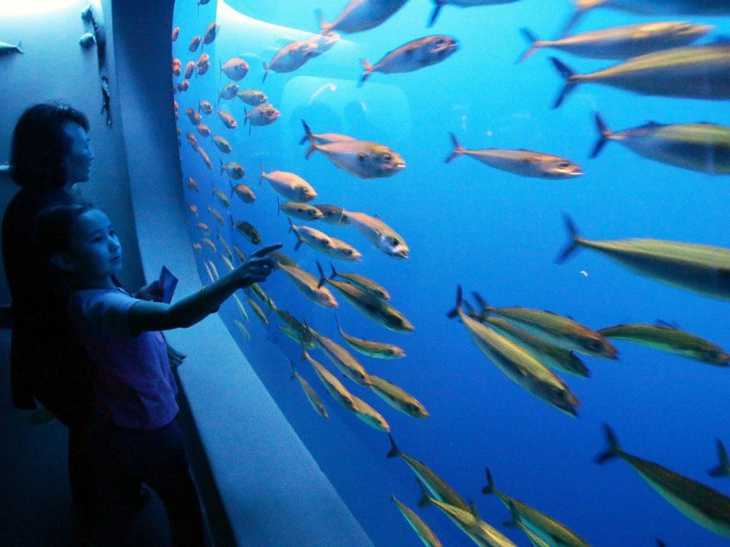 Monterey Bay Aquarium. - Occuper ses enfants pendant le confinement