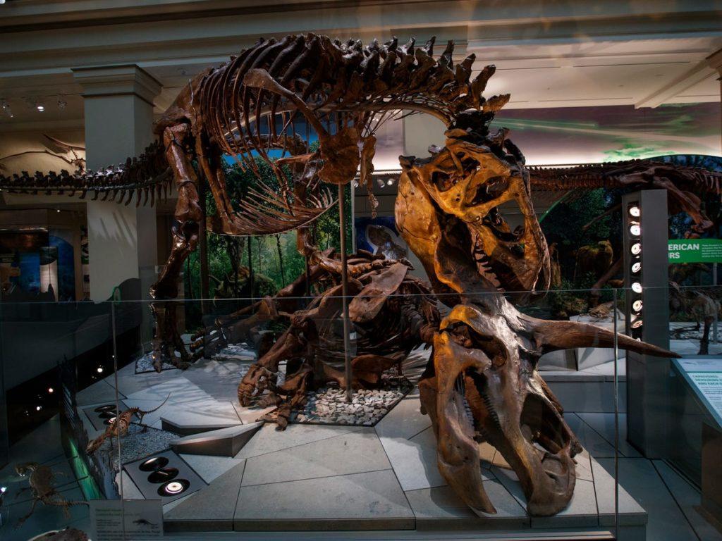 Une exposition de fossiles au Smithsonian National Museum of Natural History. - Occuper ses enfants pendant le confinement